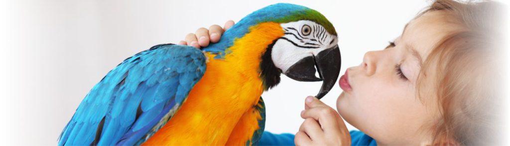 header-bird