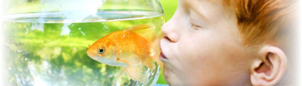 header-fish