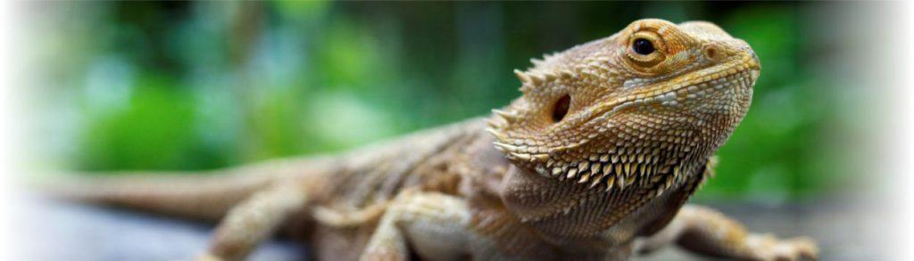 header-reptile